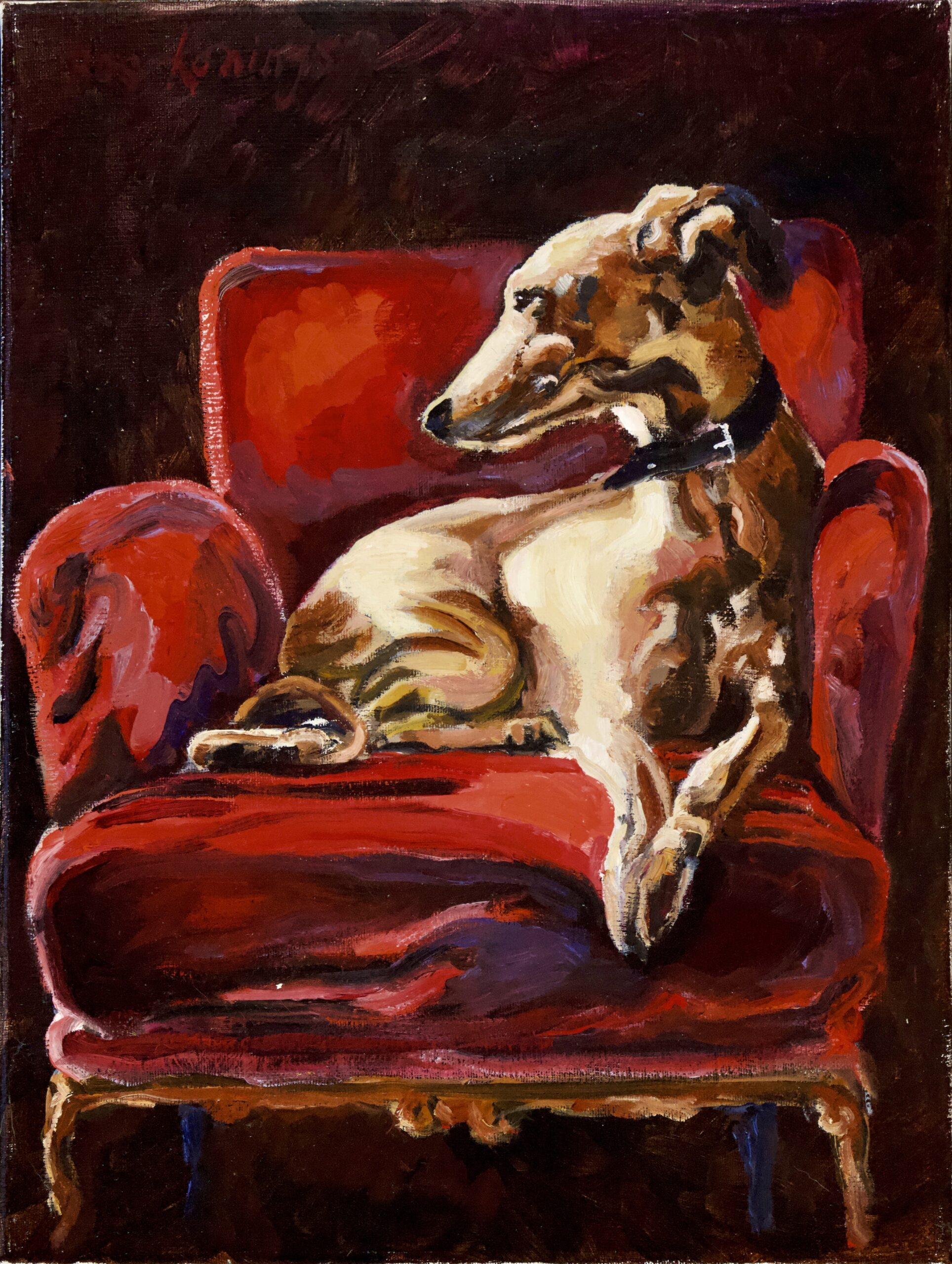 240920_Bas Konings-Hazewindhond in rode stoel